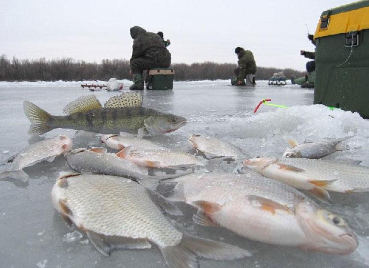 ловля рыбы в нижнем